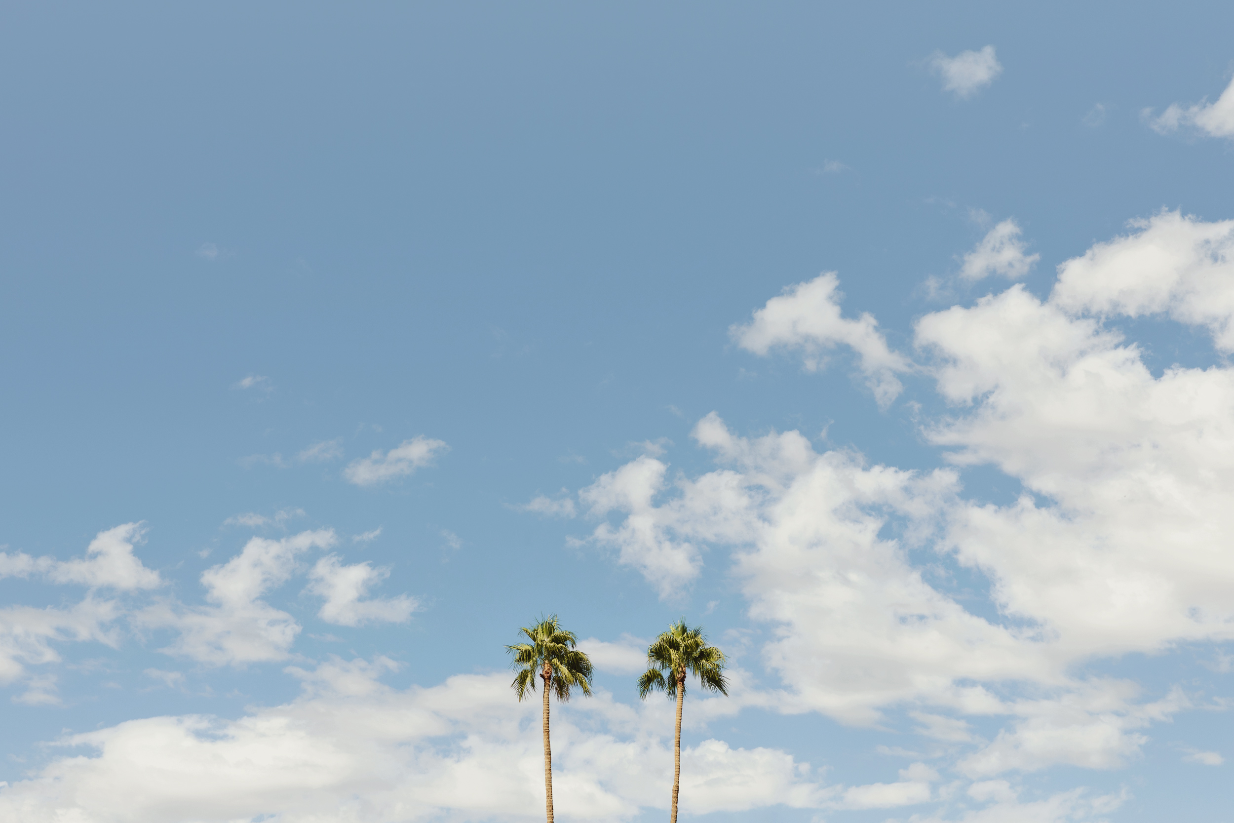 Two palm trees on a cloudy day. Kimberly Genevieve lifestyle photographer Los Angeles