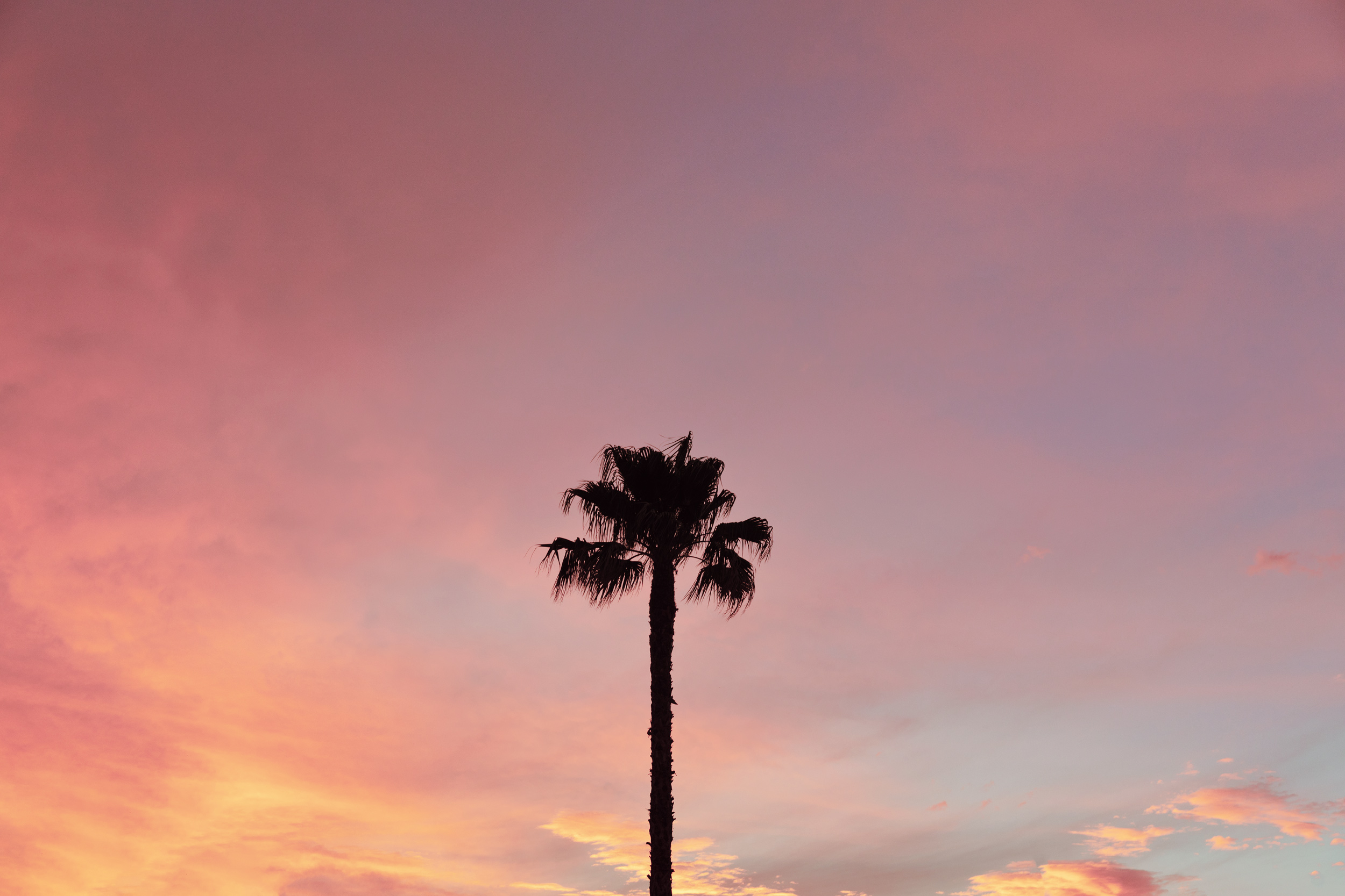 Palm Tree at sunset. Kimberly Genevieve lifestyle photographer Los Angeles