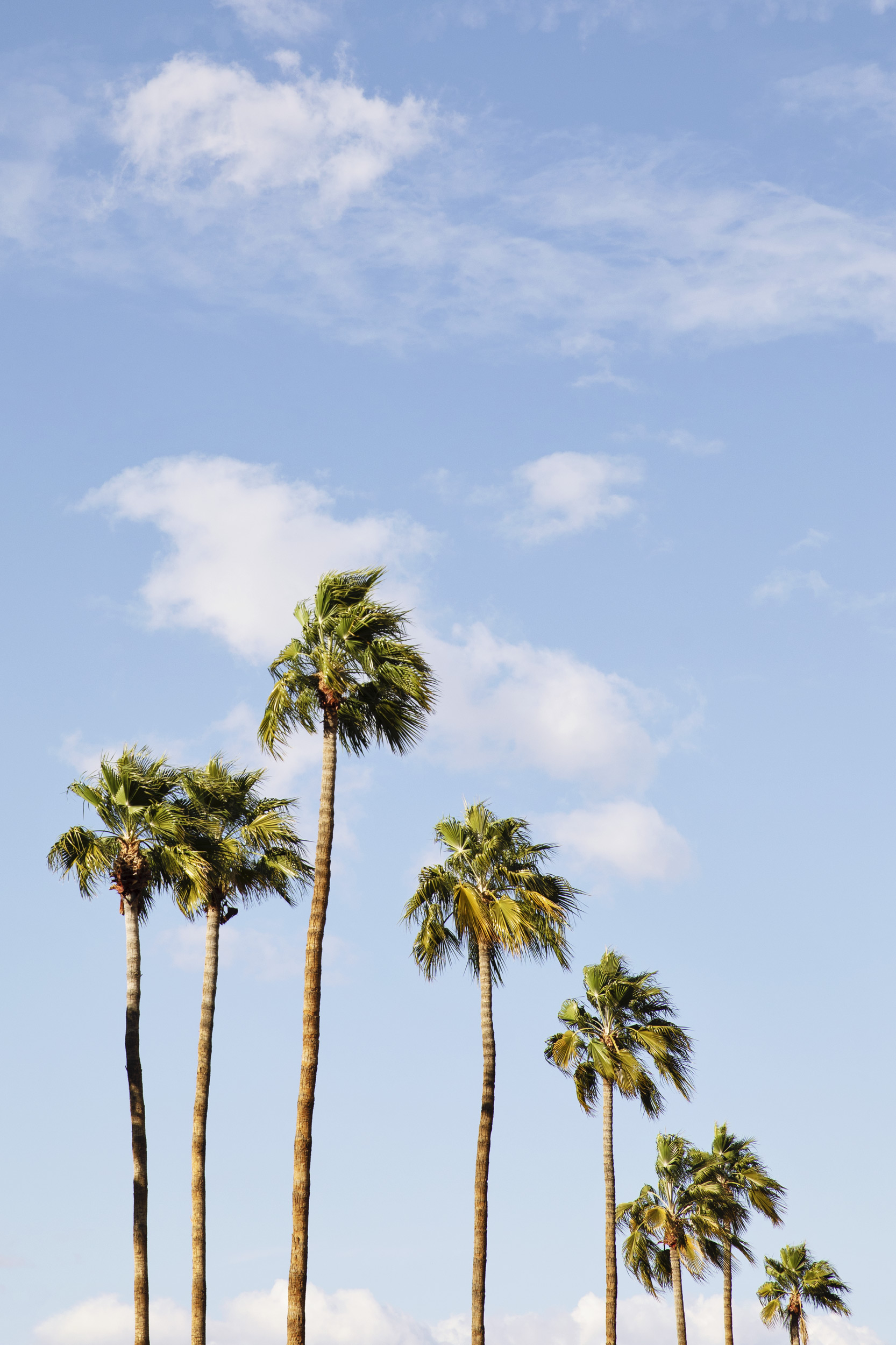 Green palm trees. Kimberly Genevieve lifestyle photographer Los Angeles