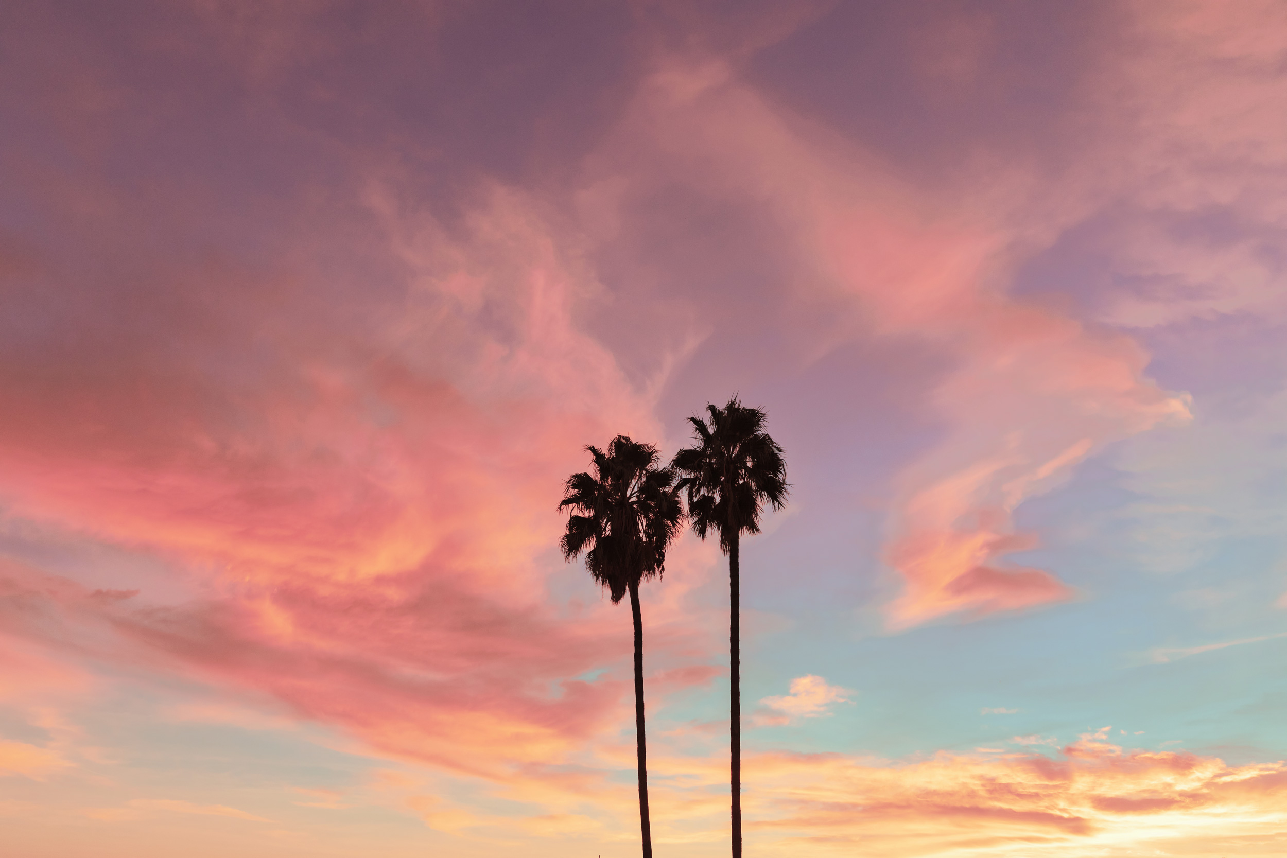 Palm trees with a sunset. Kimberly Genevieve lifestyle photographer Los Angeles