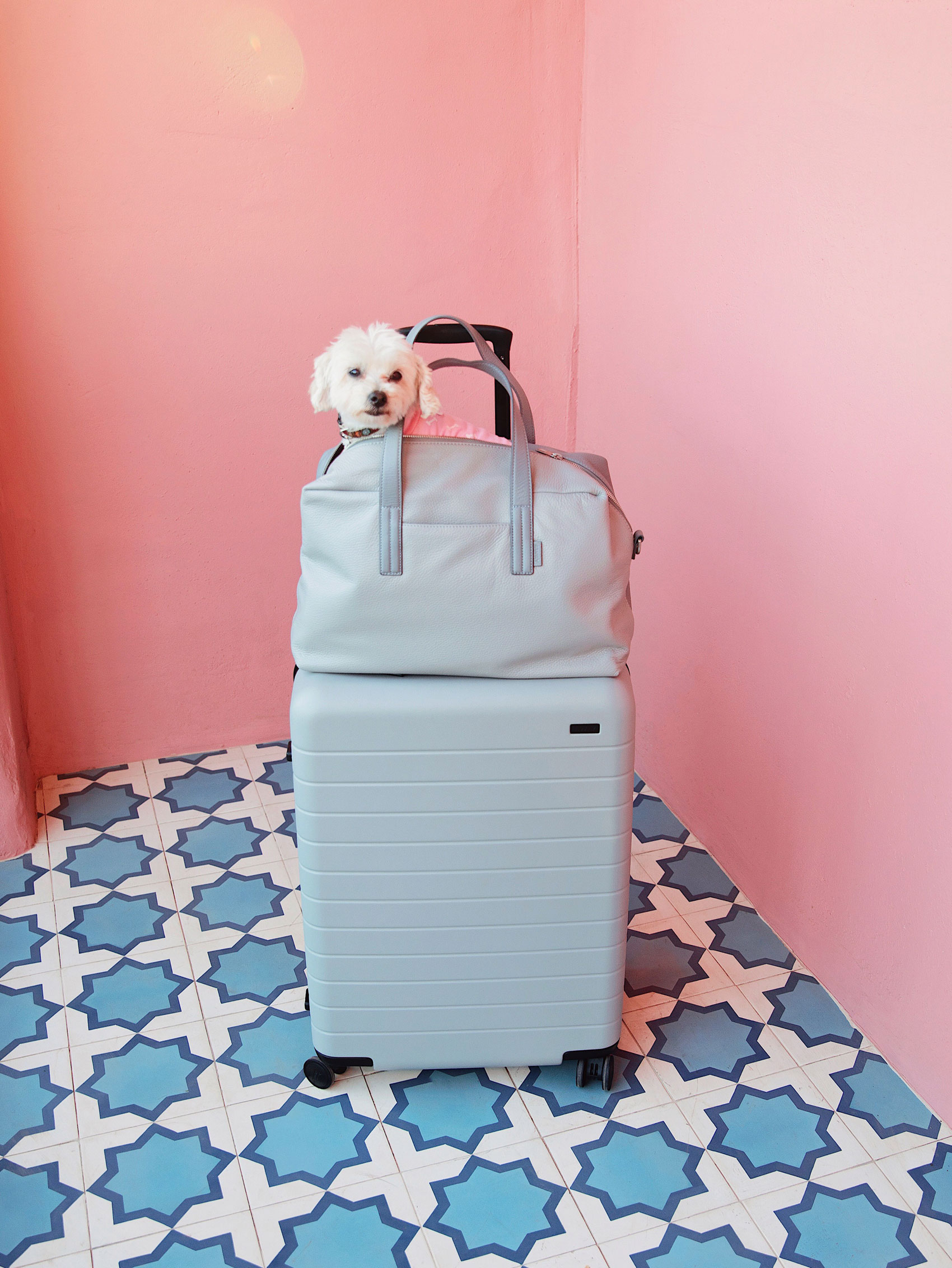 Doggy in a travel bag. Kimberly Genevieve lifestyle photographer Los Angeles
