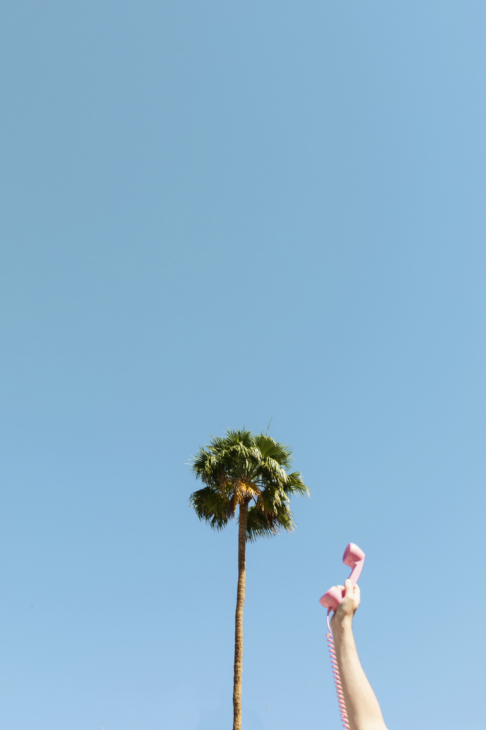 Hello palm trees. Kimberly Genevieve lifestyle photographer Los Angeles